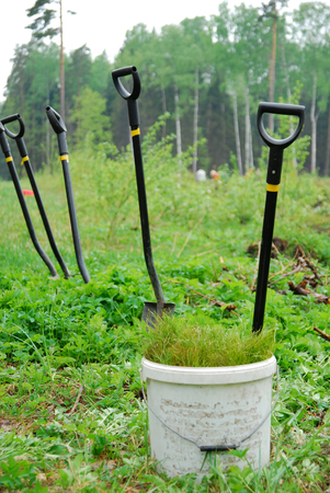 Shovels and seedlings - sowing new trees in a forest