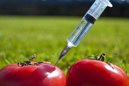 Genetic modification - tomatoes