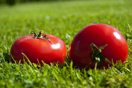 Two Red tomatoes Imagens
