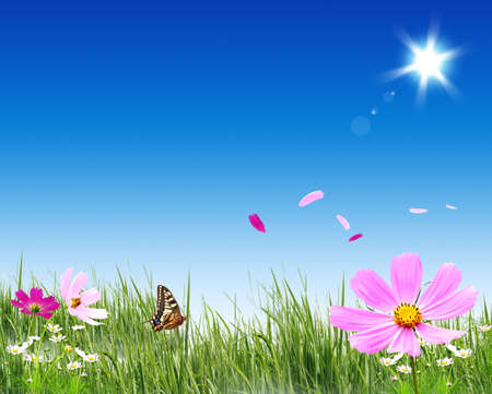 Nice spring picture with green grass and flowers Stock Photo - 4446191