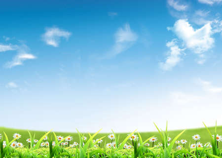Nice picture with spring flowers under blue sky Stock Photo - 4530260