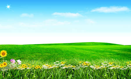 Nice picture with spring flowers under blue sky Stock Photo - 4530274