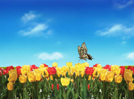 Nice tulips filed in spring under blue sky Stock Photo - 4530254
