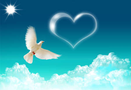 Loved dove flying in the blue shining sky Stock Photo - 5099066