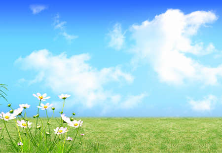 A nice fresh spring views with green field and flowers