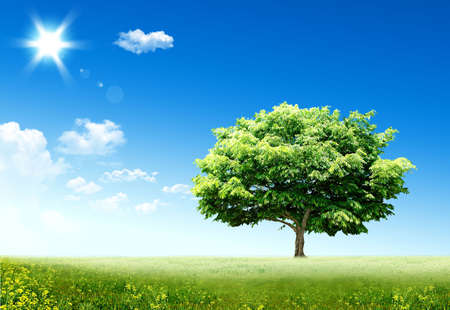 Nice spring sight with a green tree and a sun Stock Photo - 5099068