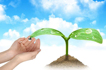A woman hands and a green plant Stock Photo - 5099078
