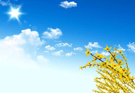Nice yellow plant for your spring design Stock Photo - 5099091