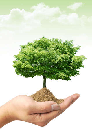 Nice spring picture with green tree on the hand Stock Photo