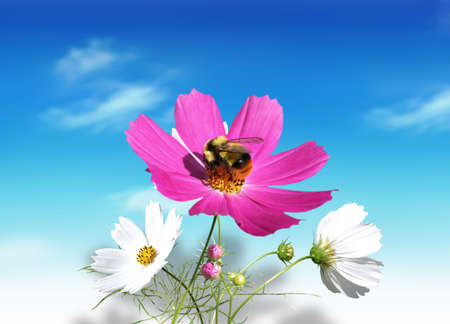 Fresh, summer flowers with a bee on the blue sky background Stock Photo
