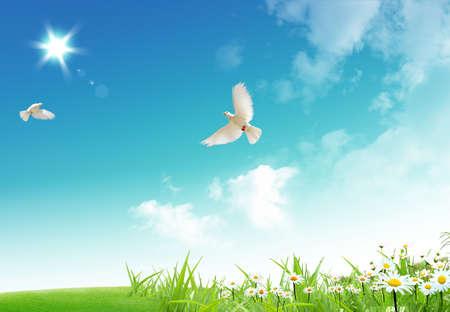 palomas volando: Dos libre de volar palomas blancas con sobre un fondo de cielo azul. Foto de archivo