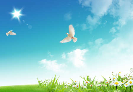 Two free flying white doves with on a blue sky background.