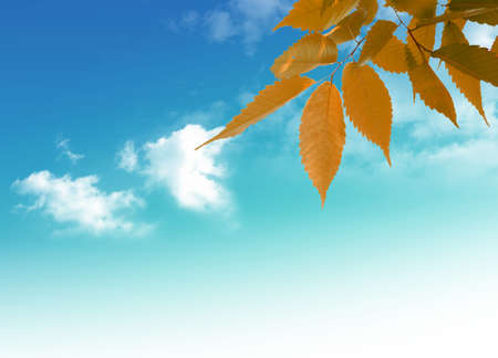 Nice picture with yellow leaves on the blue sky  background Stock Photo - 5465568