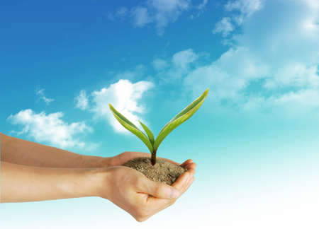 Plant in the hand on the blue sky background