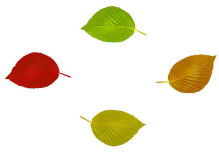 Four leaves in different color for you autumn design