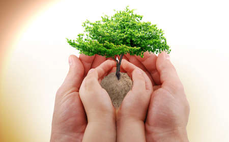 organic background: A green tree in the babys and mans hand