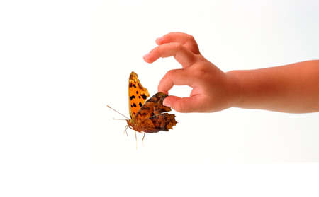 Beautiful butterfly and a babys hand photo