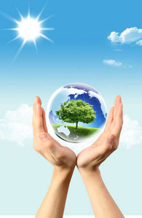 environment geography: Green tree in Globe which is in hands