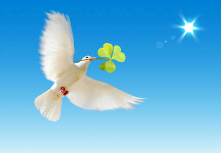 A free flying white dove with a green plant isolated on a blue sky background. Stock Photo