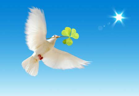 pigeons flying: Un blanco de vuelo libre de paloma con una planta verde aislada en un fondo de cielo azul.