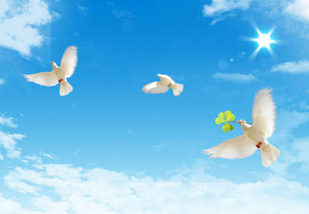 Three free flying white doves with ona a blue sky background. Stock Photo