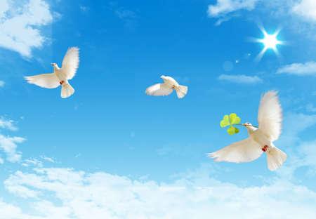 palomas volando: Tres gratis volar palomas blancas con ona un fondo de cielo azul. Foto de archivo