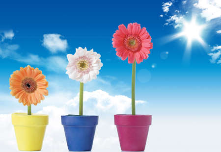 Nice spring flowers under blue sky and shining sun Stock Photo - 6292453