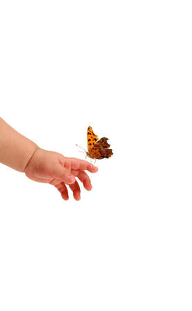 Beautiful butterfly standing on the babys hand