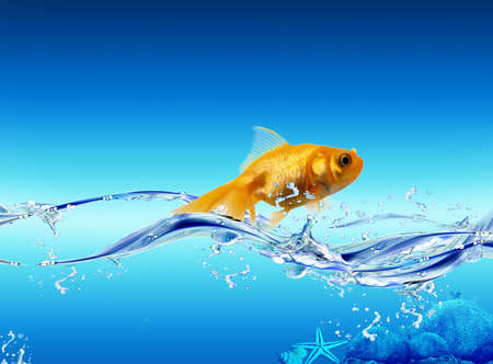 Picture with nice golden shining fish in the water Stock Photo
