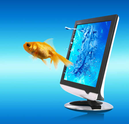 Nice picture with small golden fish which is coming out from the screen Stock Photo
