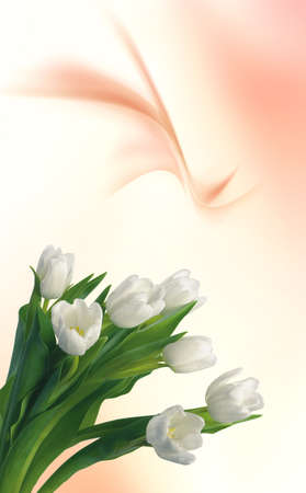 White tulips for your spring design