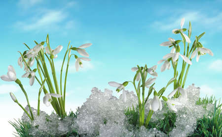 Some small snowdrops and winter for your design