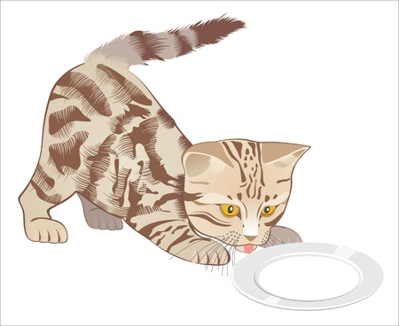kitten drinks milk from a saucer