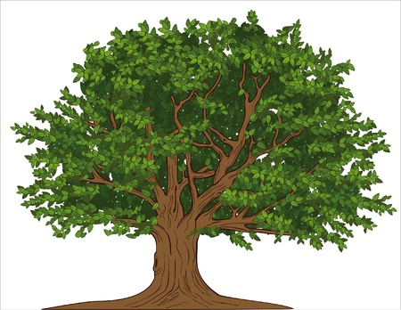 Big tree Stock Vector - 9719311
