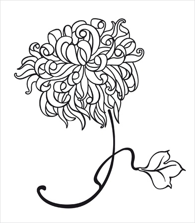 chrysanthemum flower Illustration