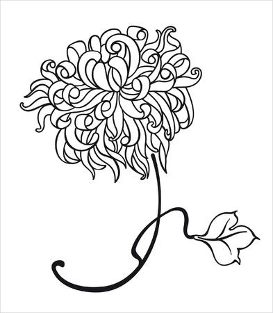 chrysanthemum flower 向量圖像