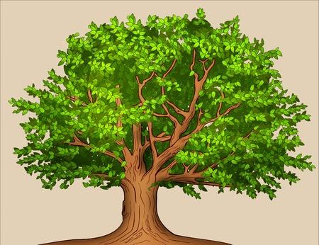 ek: Sommar träd Stockfoto