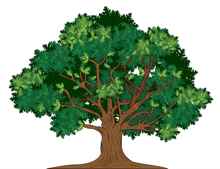 Vector illustration of old green oak tree Ilustração