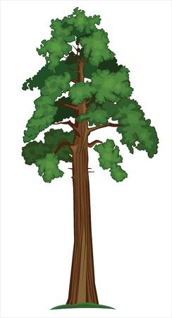 hoog gras: Pijnboom Stock Illustratie