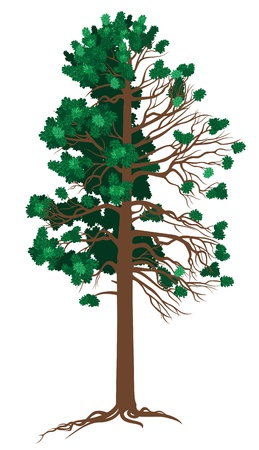 lush foliage: Vector Cedar