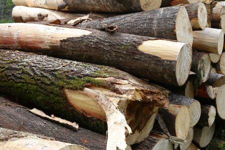 piled: Piled tree trunks closeup