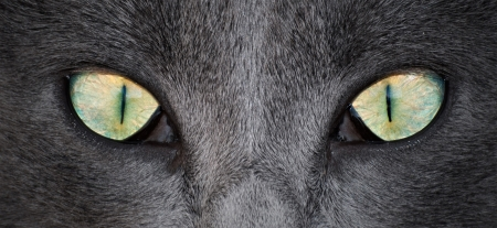Detail of cat eyes in the foreground photo