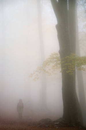 Person walking in a forest with fog
