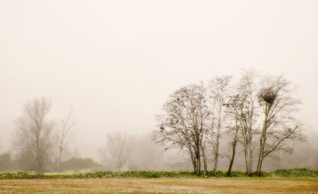Autumnal landscape with fog and trees Stock Photo - 18124887