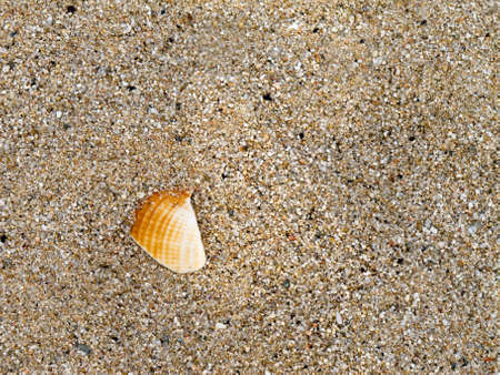 Detail of a shell in the sand photo