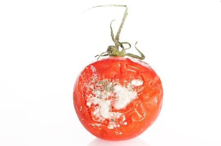 decomposition: Detail of a tomato in a state of decomposition