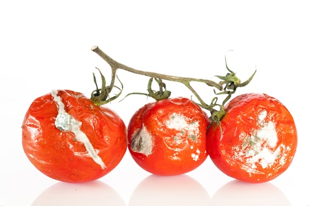 Detail some tomatoes in a state of decomposition Stock Photo