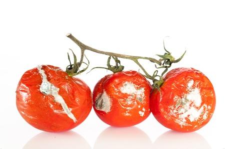 jitomates: Detalle de algunos tomates en estado de descomposición Foto de archivo