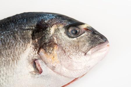 gilt head: Detailed view of a gilt head fish