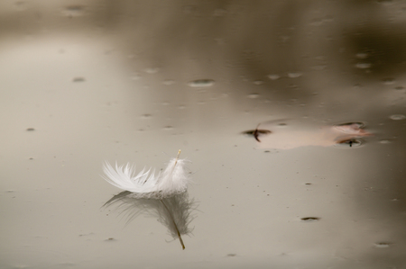 Detail of a feather on water photo